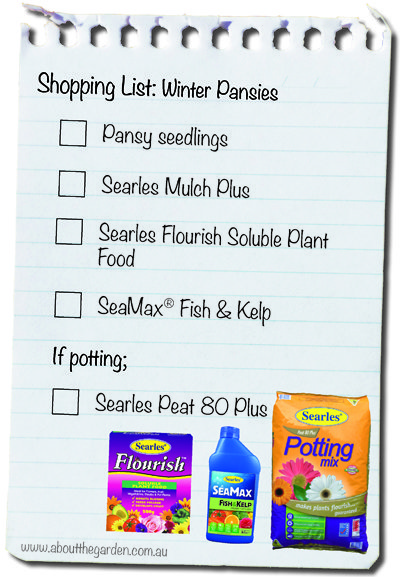 growing winter flowers a pansy shopping list