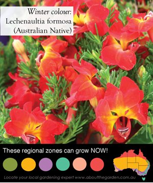 red flowering australian native that is ideal for hard to grow places like rockery gardens