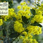 5 Australian Natives for Winter Colour by Temperate Zone