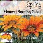 Spring Flower Planting Guide for Australia (Web) #aboutthegarden.com.au