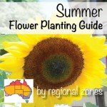 Summer Flower Planting G