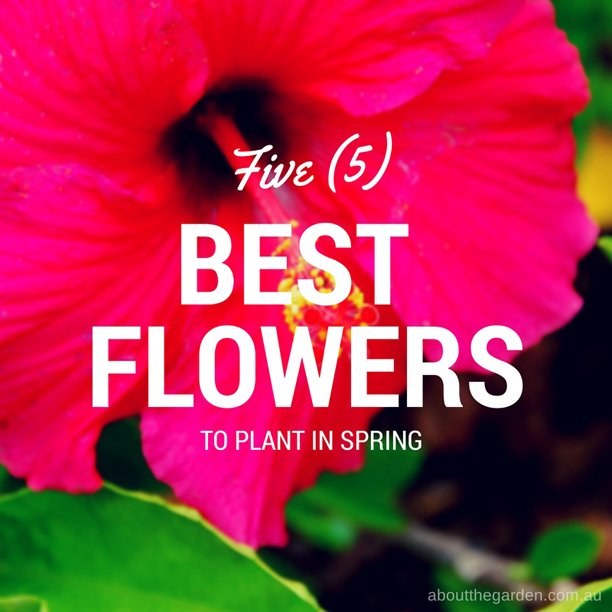 five big flowers that are best to grow in spring