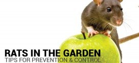 Preventing and Controlling Rats in the Garden