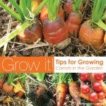 how to grow carrot in your garden