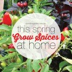 Growing Spices at Home this Spring in the garden