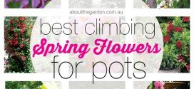 Best Climbing Spring Flowers for Pots