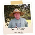 Terry Keogh dwarf and cool climate tibouchina plant breeder
