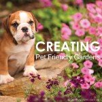Pet friendly gardens tip and hints
