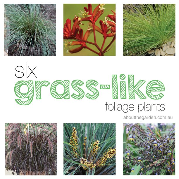 6 grass-like foliage plants for summer #aboutthegarden