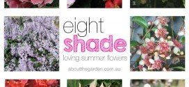 8 Summer Flowers for Shady Gardens