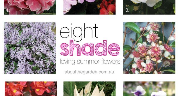 8 Summer Flowers For Shady Gardens About The Garden
