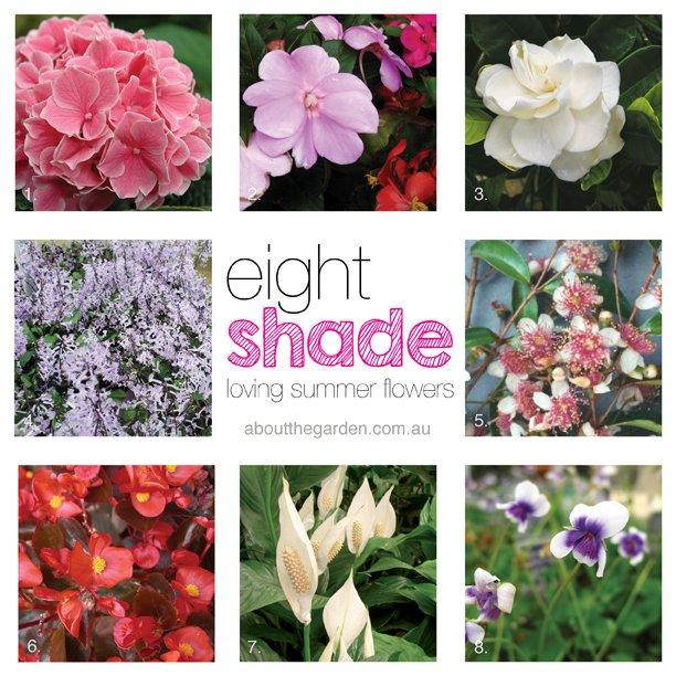 8 shade loving summer flowers #aboutthegarden