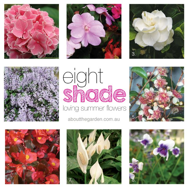summer flowers for shady gardens  about the garden magazine, Natural flower