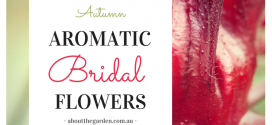 Autumn Wedding Bouquet Ideas – Aromatic Bridal Flowers!
