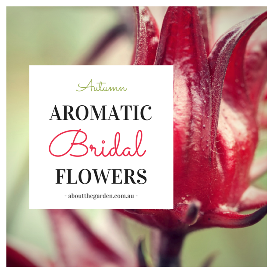 Autumn Wedding Bouquet Ideas Aromatic Bridal Flowers with About the Garden