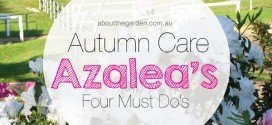 Autumn Azalea Care – Four (4) Must Do's