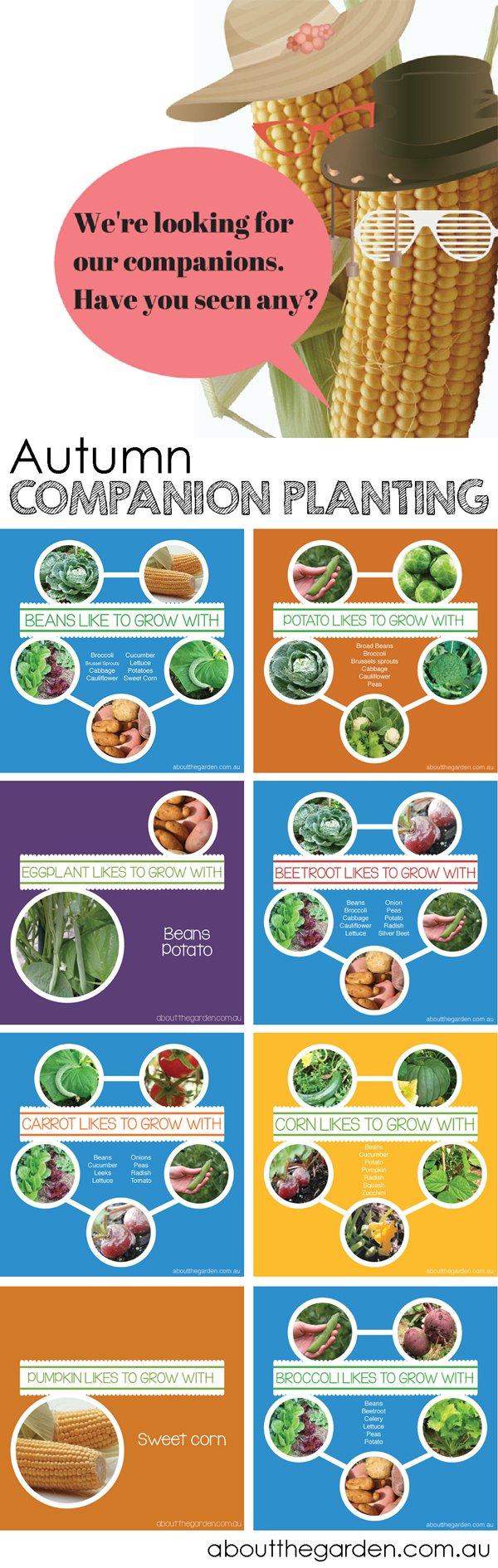 Vegetable companion plants autumn
