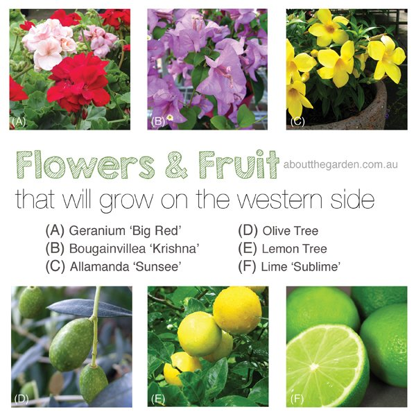 Gardening on the Western Side in Australia flowers and fruit that will grow