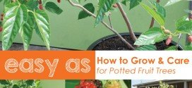 How to grow potted fruit trees in australia #aboutthegardenmagazine