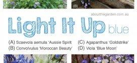 Light it up Blue Blue Autumn Flowers for Autism Awareness #LIUB