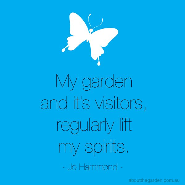My garden and it's visitors regularly lift my spirits Jo Hammond the Butterfly Host Plants
