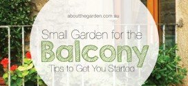 Small Balcony Garden – Tips to Get You Started