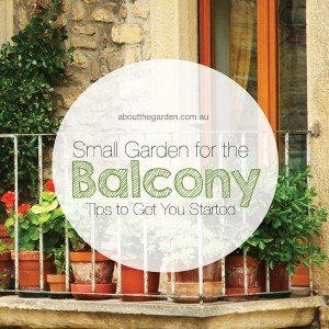 Small Balcony Garden Tips to Get You Started