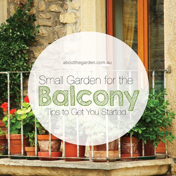 Small Garden Secrets: Small Balcony Garden Tips To Get You Started