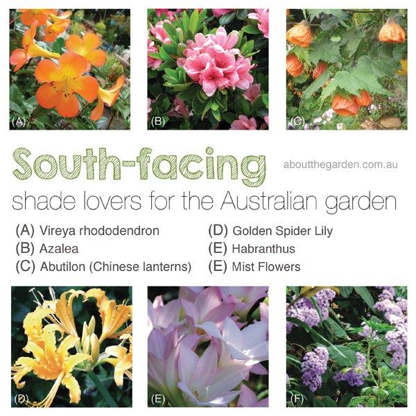 South-facing shade lovers for the Australian Garden #aboutthegardenmagazine