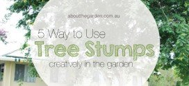 5 Ways To Make The Most Out Of Your Tree Stumps