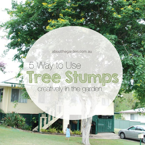 Ways To Make The Most Out Of Your Tree Stumps