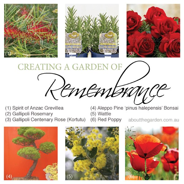 Anzac Day create a garden of remembrance six plants to consider in Australia