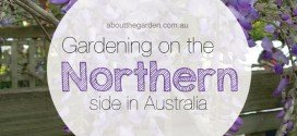 Gardening on the North Side in Australia