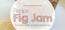 Recipe Carolyn's Homemade Fig Jam