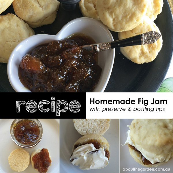 recipe homemade fig jam with preserve and bottling tips