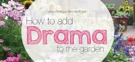 How to Add Drama on Garden Design