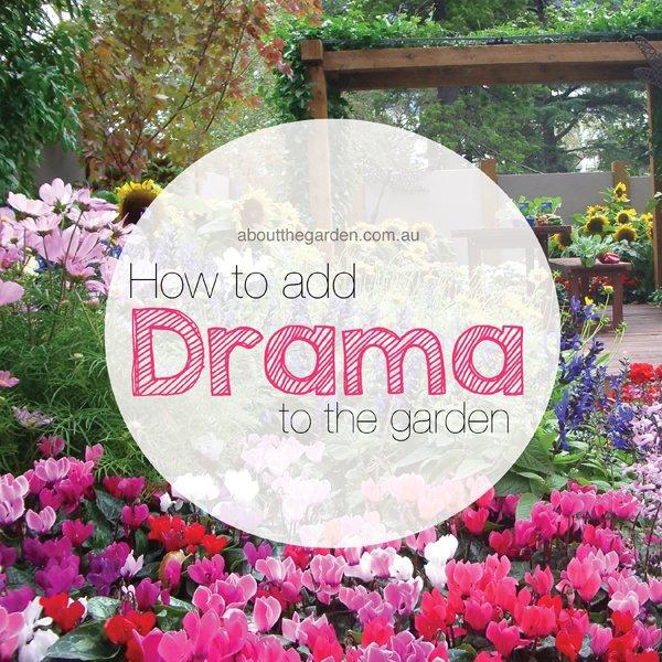Add drama to the garden aboutthegarden