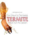 Five (5) gardening design tips to decrease termite attack on your home About the Garden Magazine