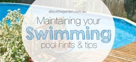 Maintaining your swimming pool