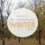 Tips To Preparing Your Garden For Winter about the garden magazine