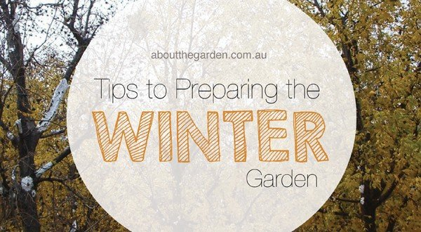 tips to preparing your garden for winter  about the garden magazine, Natural flower