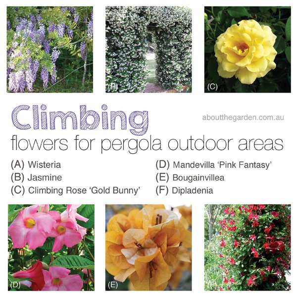 climbing flowers for pergola areas Backyard Ideas for Winter Building Projects aboutthegardenmagazine