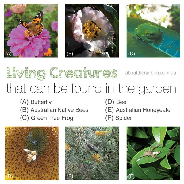 living creatures that can be found in the garden