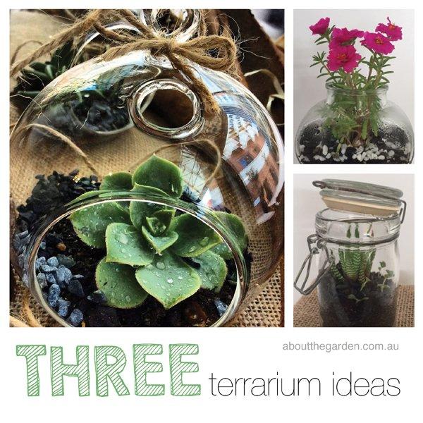 three terrarium ideas using succulents indoor about the garden magazine