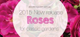 New releases roses from Treloar roses
