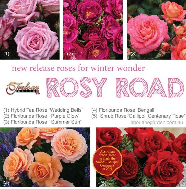 Treloar Roses.indd