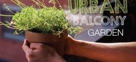 6 Tips for the ultimate urban balcony garden