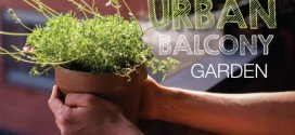 6 Tips for the ultimate urban balcony garden