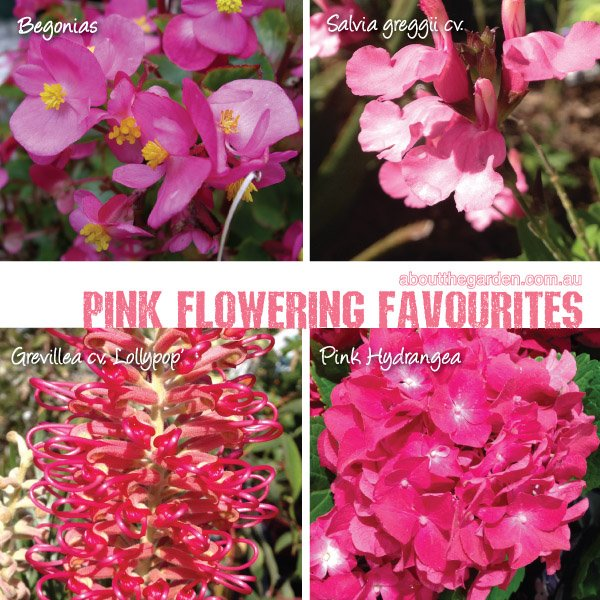 Best Pink Flowering Plants varieties in Australia 2 #aboutthegar