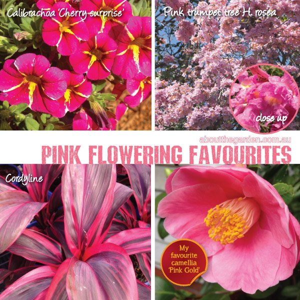 Best Pink Flowering Plants varieties in Australia #aboutthegarde